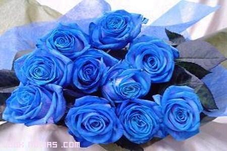 rosas para bodas